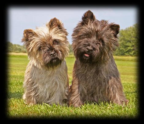 Gateway Cairn Terriers
